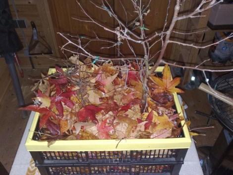 bonsaibox