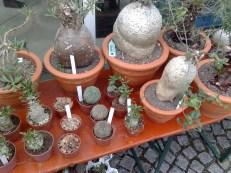 fruehjahrs_pflanzenraritaetenmarkt_gruga_2_270413