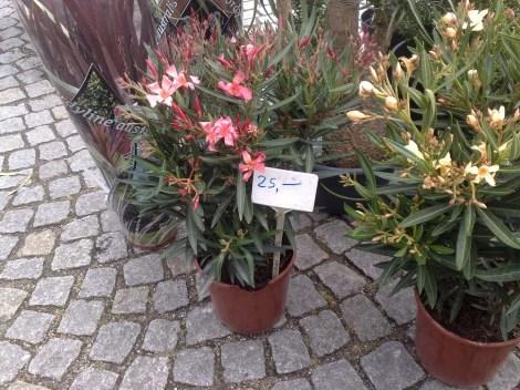 fruehjahrs_pflanzenraritaetenmarkt_gruga_3_270413