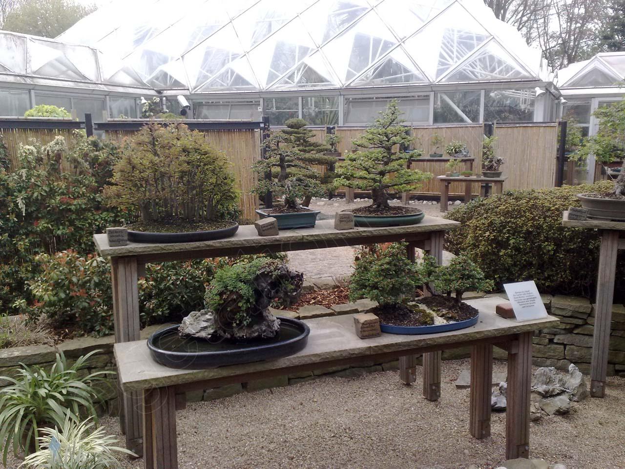 20 nrw bonsaitage in essen vegetation daheim With whirlpool garten mit bonsai essen