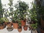 pflanzen_060613_2