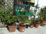 pflanzen_060613_3