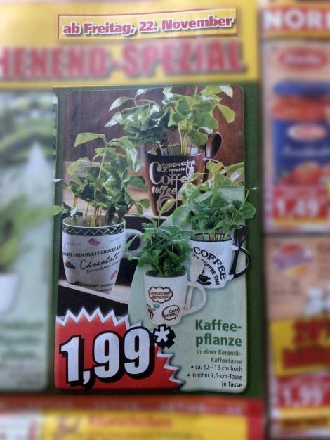 kaffeepflanzen_norma_221113