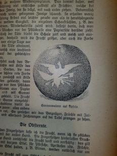 gartenbuch_fuer_anfaenger_12