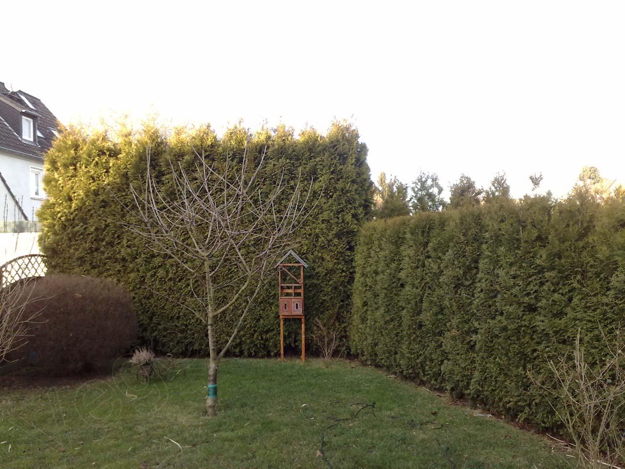 gesetzlicher vogelschutz und heckenschnitt im februar vegetation daheim. Black Bedroom Furniture Sets. Home Design Ideas