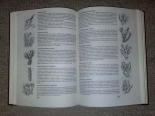 kakteenbuch_2