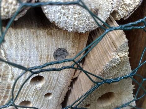 insektenhotel_220414_1