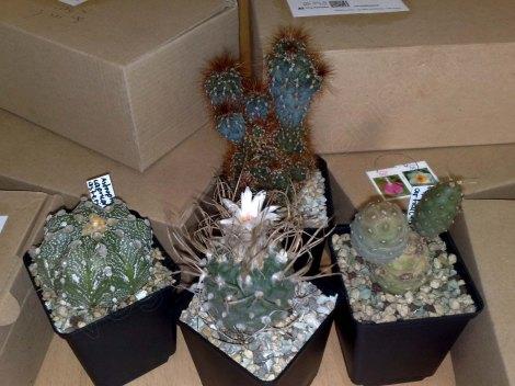 kleinere Pflanzen von Privatverkäufern werden oftmals als Warensendung verschickt.