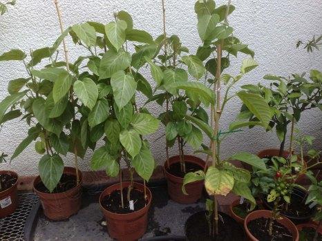 ..die selben Pflanzen ein 3/4 Jahr später