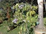 flora_koeln_10