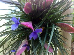 flora_koeln_20
