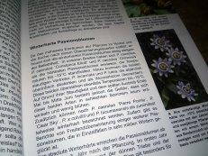 passiflora_4
