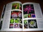 passiflora_6