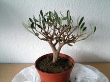 olive_100315_2