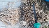 Kirschbaumschnitt Jetzt Nach Der Ernte Vegetation Daheim