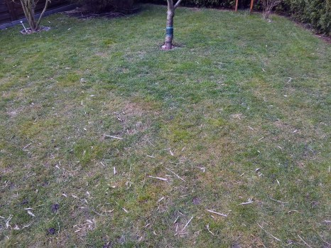 frisch gemähter Rasen
