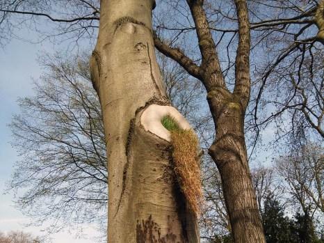 bot. Garten Duisburg Hamborn - Baum erbricht.