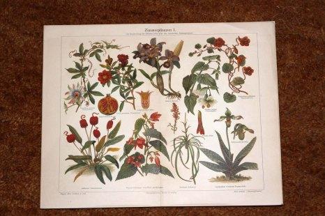lithographien_zimmerpflanzen1