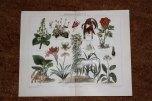 lithographien_zimmerpflanzen2