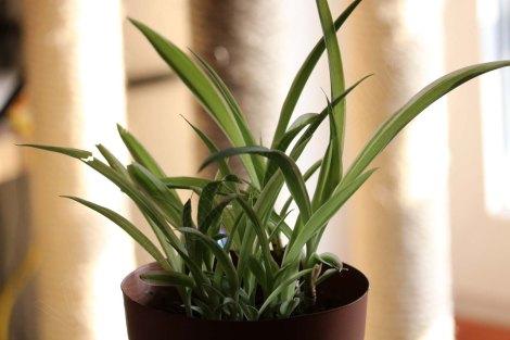 wenige Wochen später: die Pflanze wächst und gedeiht