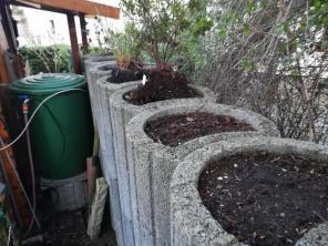 die Pflanzringe wurden vom Unrat befreit und mit frischem Kompost gefüllt